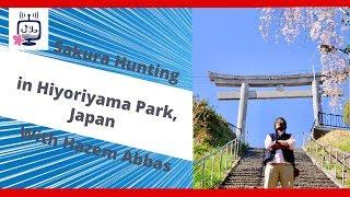 Sakura Hunting in Ishinomaki City, Miyagi, Japan