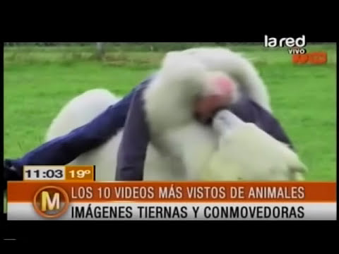 Los 10 videos más vistos de animales en Internet
