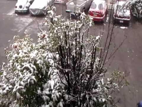 Nieve zacatecas Video