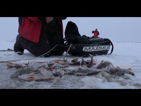 Ловля окуня зимой на блесну. озеро Ильмень. Аркадский залив. Трудовая рыбалка 2018.