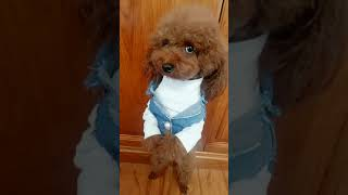 Look at these cute and funny puppies dogs 1656