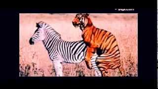 animal sex videos   funny sex video   crazy videos