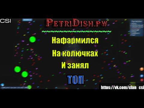 PETRIDISH.PW | НАФАРМИЛСЯ НА КОЛЮЧКАХ | ТОП 1 ЗА 3 МИНУТЫ.