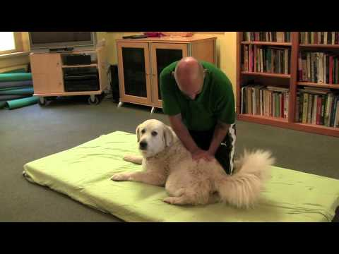 Dog Massage Demonstration