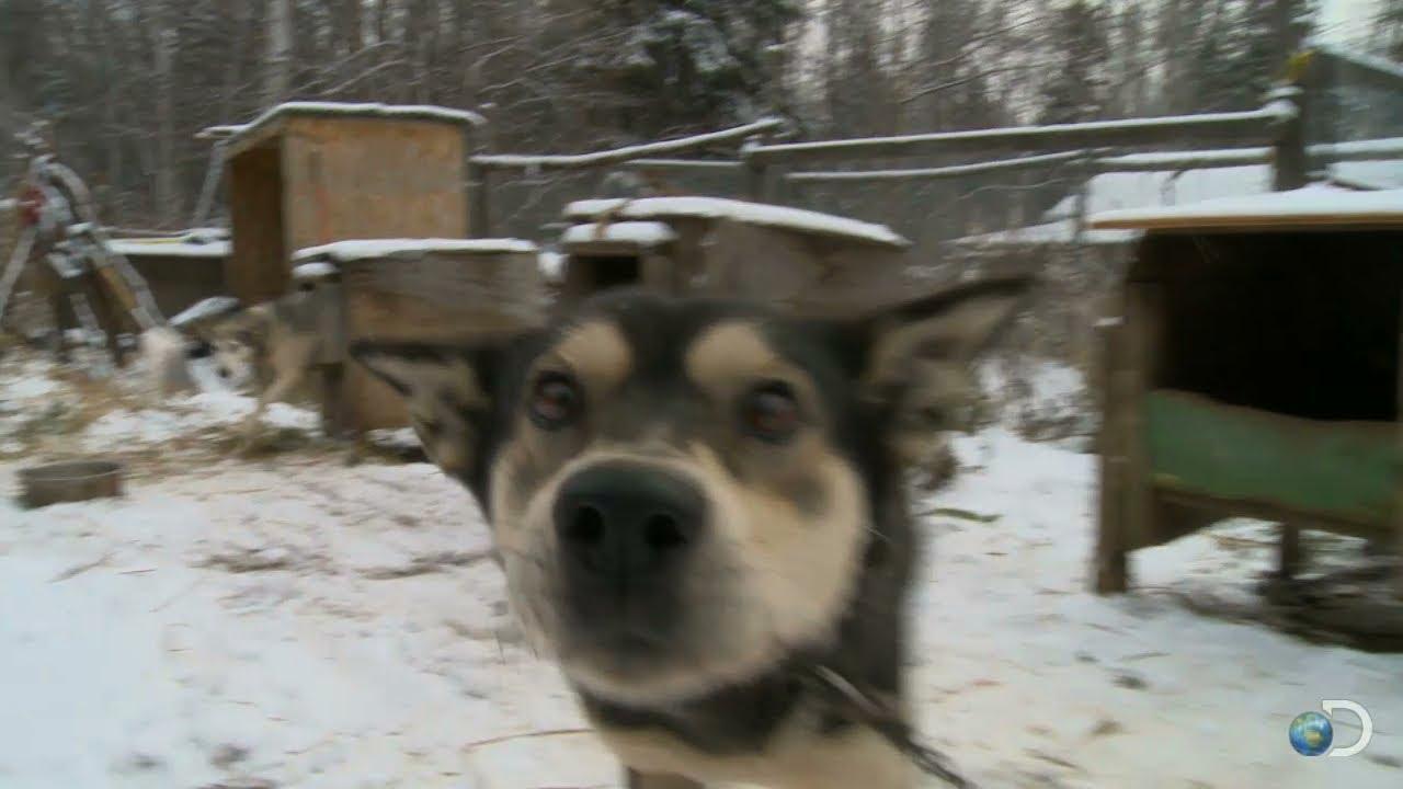 behind-the-scenes  meet stan u0026 39 s sled dogs