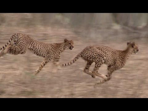 WILDLIFE IN AFRICA [HD 1080p] Safari in Ruaha
