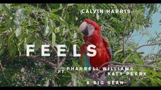 download lagu Feels - Calvin Harris Ft Pharrell Williams Katy Perry gratis