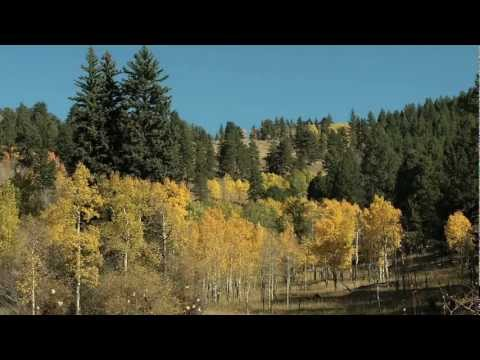 Golden Gate Canyon State Park Fall Colors - More than 12,000 acres of dense forest, rocky peaks, and aspen-rimmed meadows laced with miles of trails awaiting the hiker, horseback rider, mountain biker and winter sports enthusiast at Golden Gate State Park.   Only 30 miles from Denver, Golden Gate Canyon offers such amenities as a electrical hook-ups and tent-sites in two different campgrounds, stocked fishing ponds, picnic sites and the Panorama Point Scenic Overlook, where visitors can see 100 miles of the Continental Divide. The park's numerous group facilities can host several types of events, from weddings to family reunions and company picnics.  Besides camping, overnight guests can also stay at one of the five cabins and two yurts at Golden Gate. In 2008, the park began renting out guest houses, a first for a Colorado State Park. Winter will find visitors cross-country skiing, snowshoeing, sledding, ice fishing and ice skating.  See coloradolottery.com for more inexpensive family getaways and http://www.parks.state.co.us/parks/goldengatecanyon/Pages/GoldenGateStatePark.aspx for more information about Golden Gate Canyon State Park.