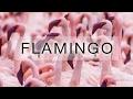 Flamingo, Kenia, Lake Bogoria