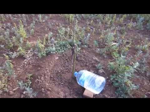 Riego por goteo casero con botella 5 u 8 Lt de agua (PET). Home made watering feeder system 1/2