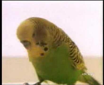 Beszélő papagáj