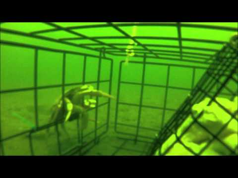 GoPRo Crabbing in Puget Sound