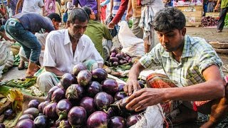 Bt Eggplant: A new option for farmers in Bangladesh