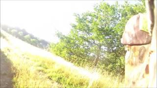 Chasse au Chevreuil à l'Approche