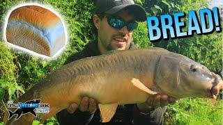 Epic Fishing with BREAD!   TAFishing