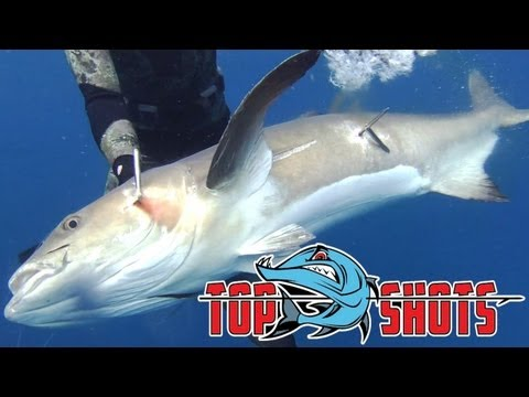 Top Shots - Spearfishing Series - Ian Brookes - Australia
