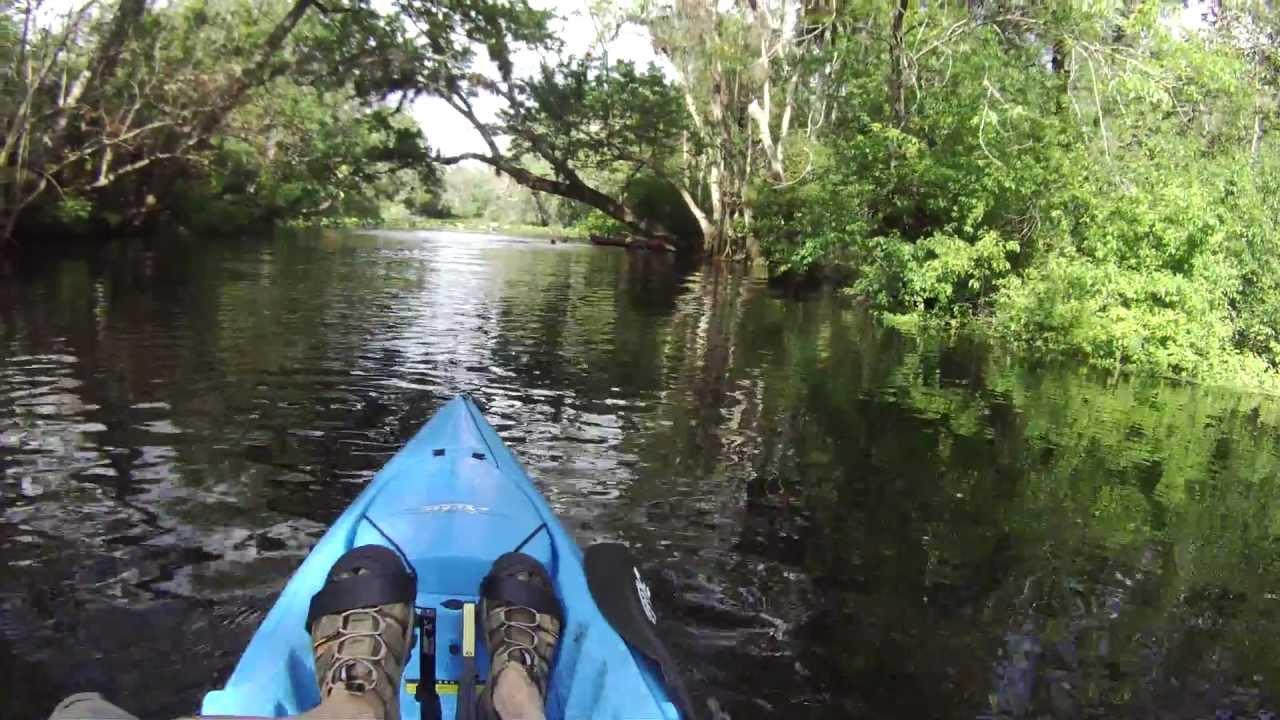Wekiva River Monkeys Wekiva Monkeys Tree Divers
