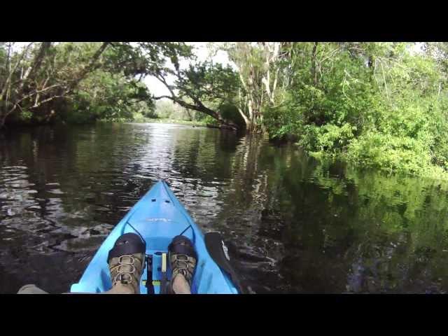 Wekiva River Monkeys ▶ Wekiva Monkeys Tree