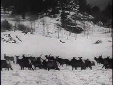The Wapiti of Jackson Hole - 1939