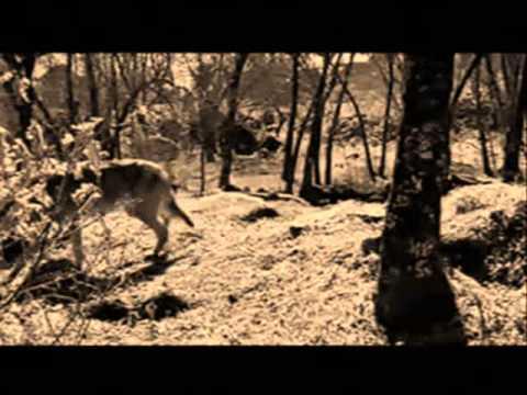 Metallica Of wolf and man (subtitulado en...