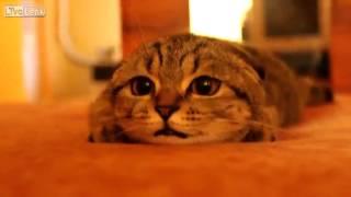Scott CAT ready to pounce