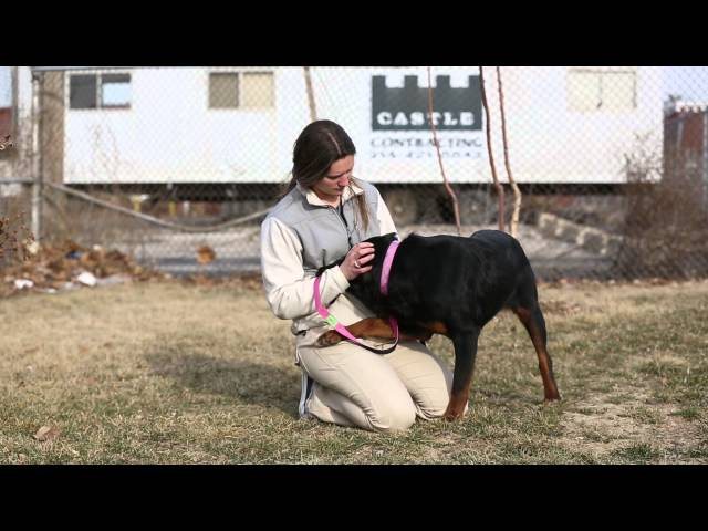 Meet Paisley - Adoptable Dog in St. Louis | Gateway Pet Guardians