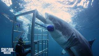 The Boldest Bites   Shark Week's Most Intense Encounters