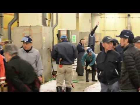 츠키지시장 - 도쿄 여행 / Tsukiji Fish Market - Tuna Auction / Tokyo Travel Blog