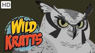 Wild Kratts - Feathered Friends