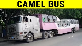 5 Most Insane Transport Methods From Around The World!