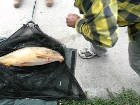 Carp Fishing in Chicago Illinois at Montrose Harbor