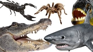 Top 10 Most Dangerous Animals In The World