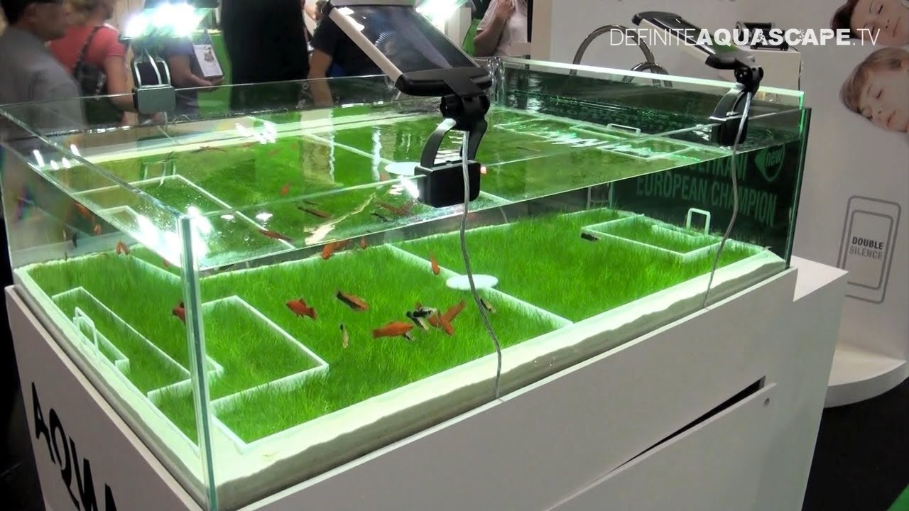 foot aquarium aquascape