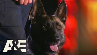 K9 Teams Compete in Front of Sticks from Live PD | America's Top Dog (Season 1) | A&E