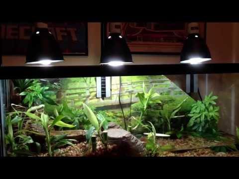 Aqarium Vivarium w a ViQarium Waterfall. Fire Belly Toads. Musk Turtle. Beta Fish & Plants