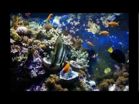 sortie a l aquarium du grau du roi le seaquarium avec sir 232 ne