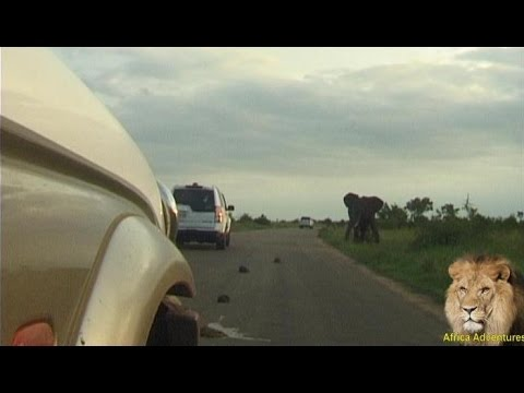 Elephant attacks and rolls car in Kruger National Park.