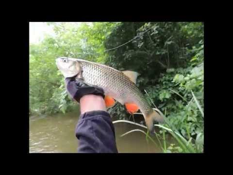 южный буг рыбалка март
