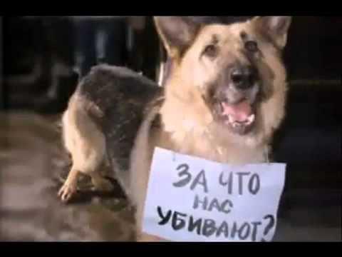 Грустное видео о животных(((