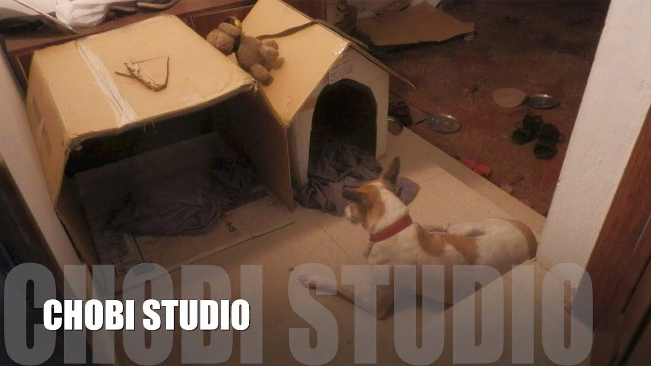 """Mangalorean Dog Chobi  """"New Construction? Chobi's House""""   【マンガロール犬チョビさん】新築?チョビはうす"""