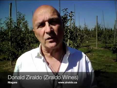 A Report On The 2010 Ontario Vintage