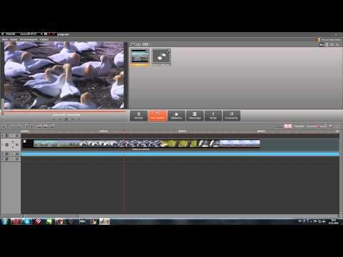 Movavi Video Editor 9 туториал!