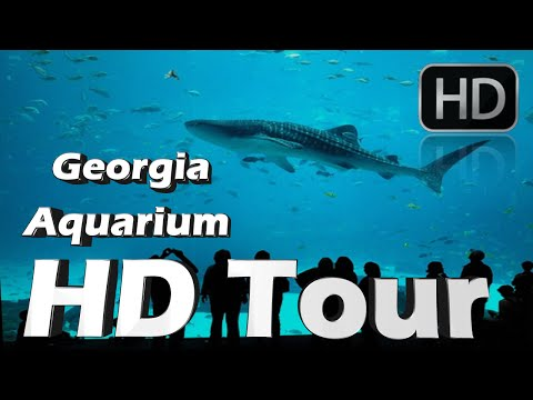 Georgia aquarium HD Tour