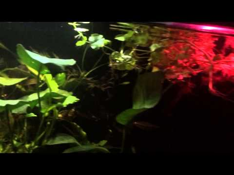 Congo biotope