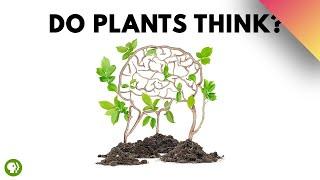 Do Plants Think?
