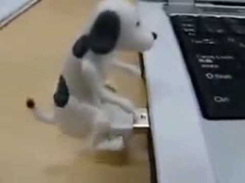 Dog Fucking Flash Drive   Fucking Pendrive Technology   Girls Pet Fucking Dog video