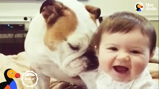FUNNY ANIMAL VIDEOS + Cutest Animals that Will Make You Laugh   The Dodo BEST OF