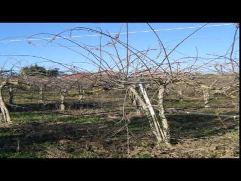 Terreno Agricolo/Coltura in Vendita da Privato - via tufello 8, Aprilia