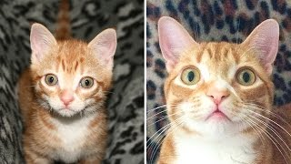 Kitten to Cat! - Cute Compilation