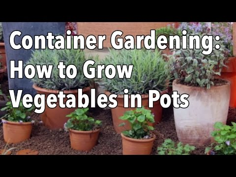 Container Gardening - How to Grow Vegetables in Pots